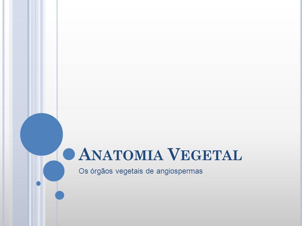 A NATOMIA V EGETAL Os órgãos vegetais de angiospermas