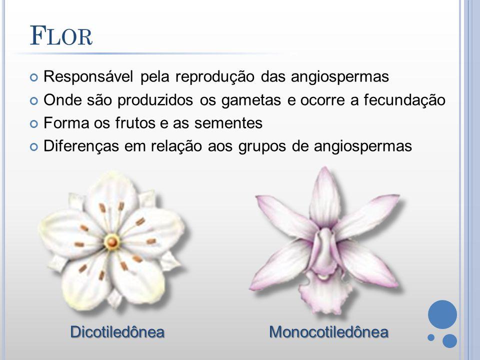 Responsável pela reprodução das angiospermas Onde são produzidos os gametas e ocorre a fecundação Forma os frutos e as sementes Diferenças em relação