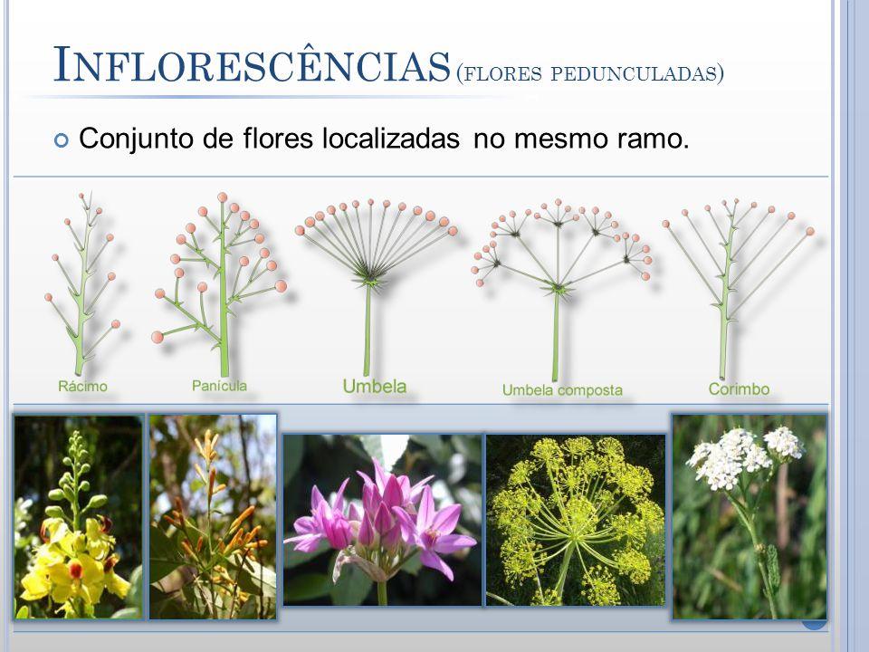 I NFLORESCÊNCIAS ( FLORES PEDUNCULADAS ) Conjunto de flores localizadas no mesmo ramo.