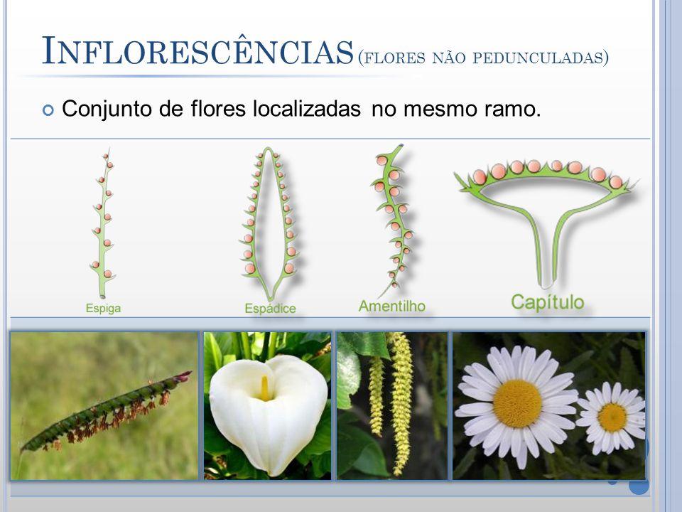 I NFLORESCÊNCIAS ( FLORES NÃO PEDUNCULADAS ) Conjunto de flores localizadas no mesmo ramo.