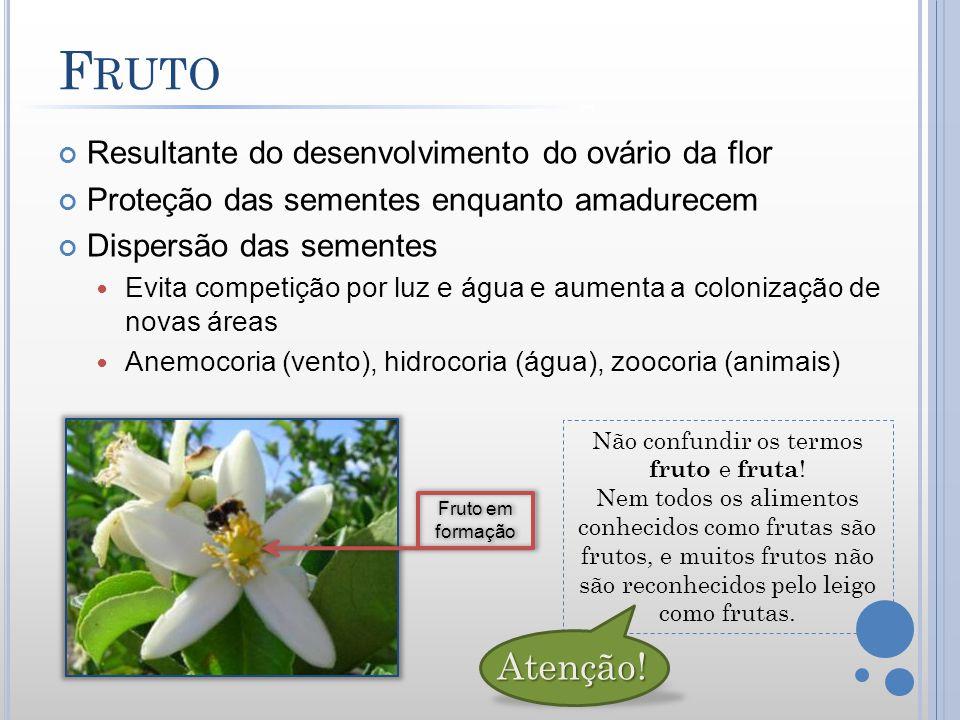 Resultante do desenvolvimento do ovário da flor Proteção das sementes enquanto amadurecem Dispersão das sementes Evita competição por luz e água e aum