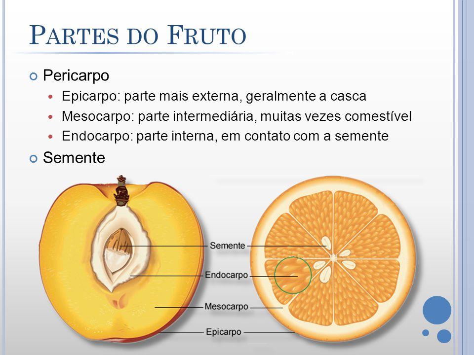 P ARTES DO F RUTO Pericarpo Epicarpo: parte mais externa, geralmente a casca Mesocarpo: parte intermediária, muitas vezes comestível Endocarpo: parte