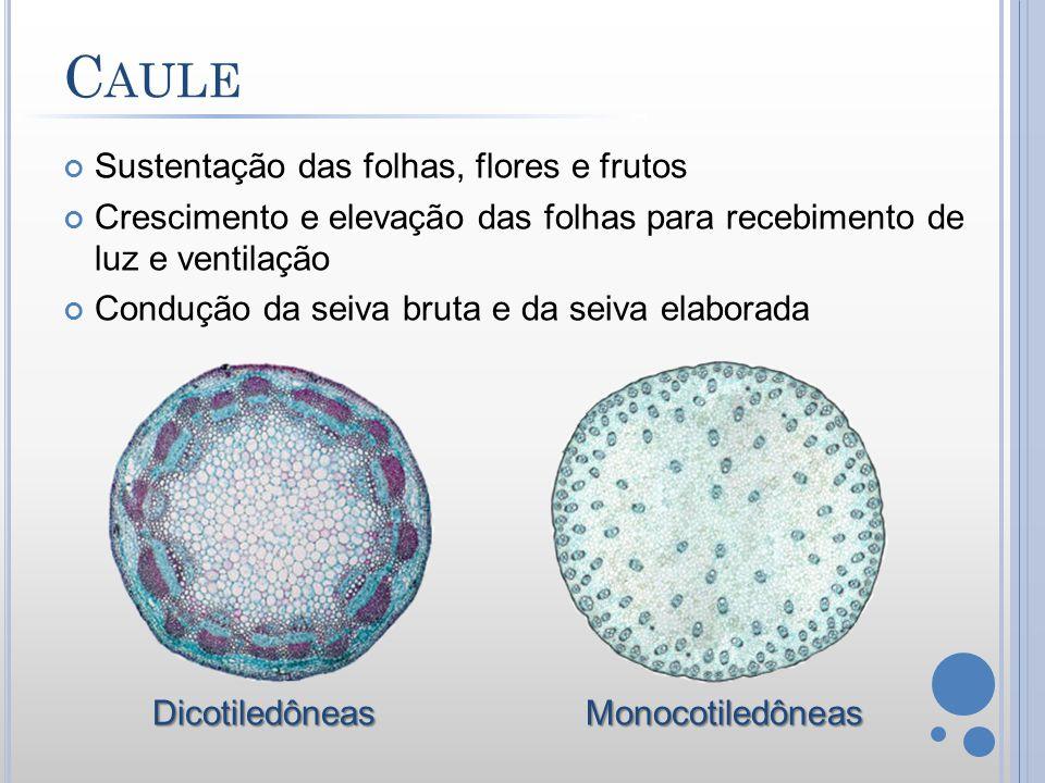 É o óvulo da flor fecundado e maduro Nutre e protege o embrião Possibilita a dispersão da espécie