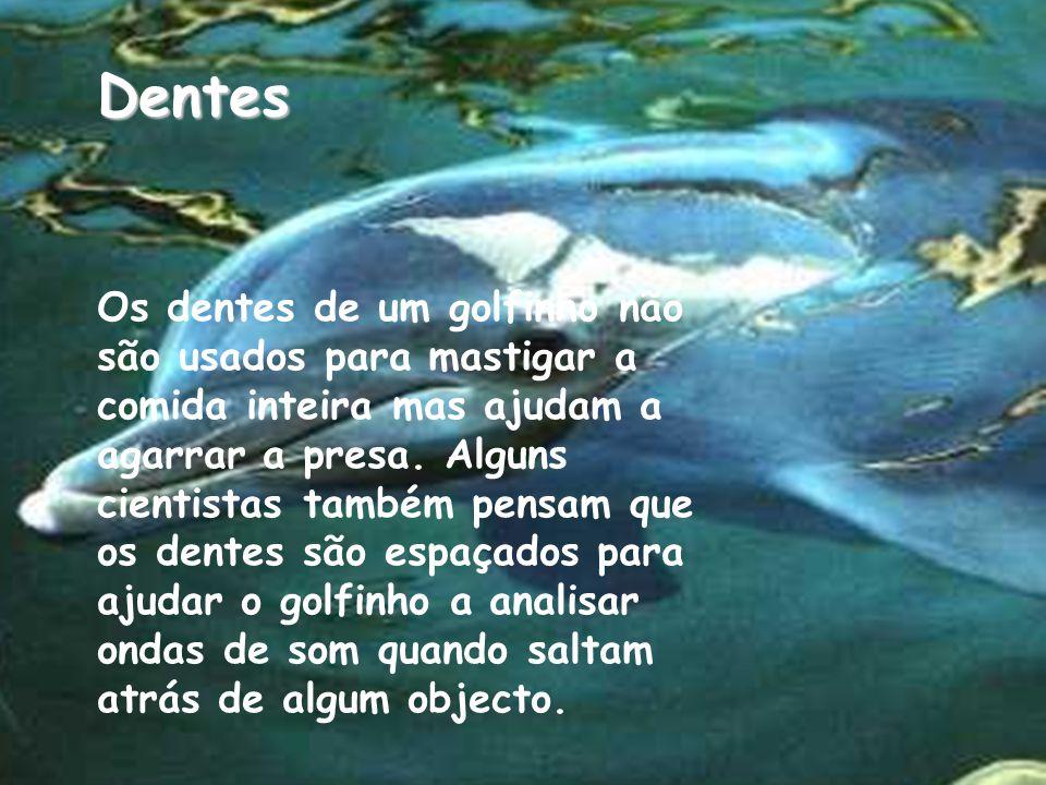 Dentes Os dentes de um golfinho não são usados para mastigar a comida inteira mas ajudam a agarrar a presa.