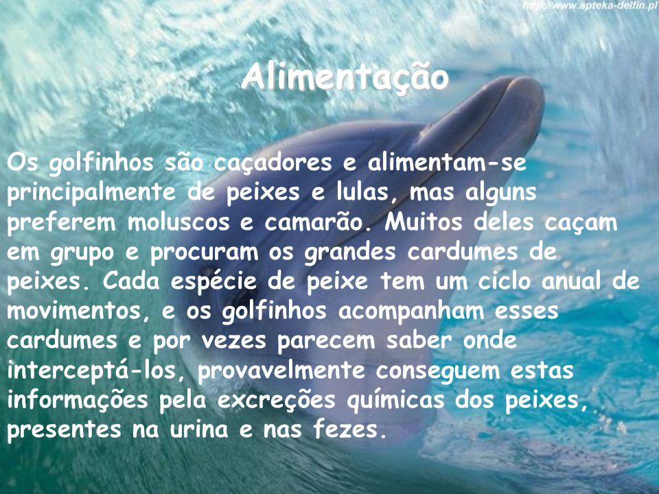 Alimentação Os golfinhos são caçadores e alimentam-se principalmente de peixes e lulas, mas alguns preferem moluscos e camarão.