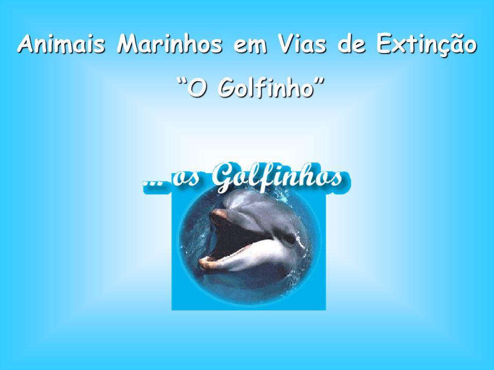 Animais Marinhos em Vias de Extinção Animais Marinhos em Vias de Extinção O Golfinho O Golfinho
