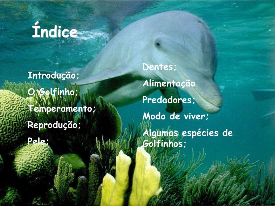 Introdução; O Golfinho; Temperamento; Reprodução; Pele; Dentes; Alimentação Predadores; Modo de viver; Algumas espécies de Golfinhos; Índice
