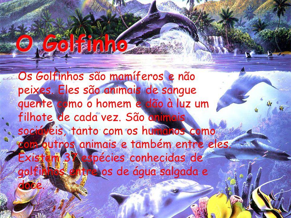 O Golfinho Os Golfinhos são mamíferos e não peixes.