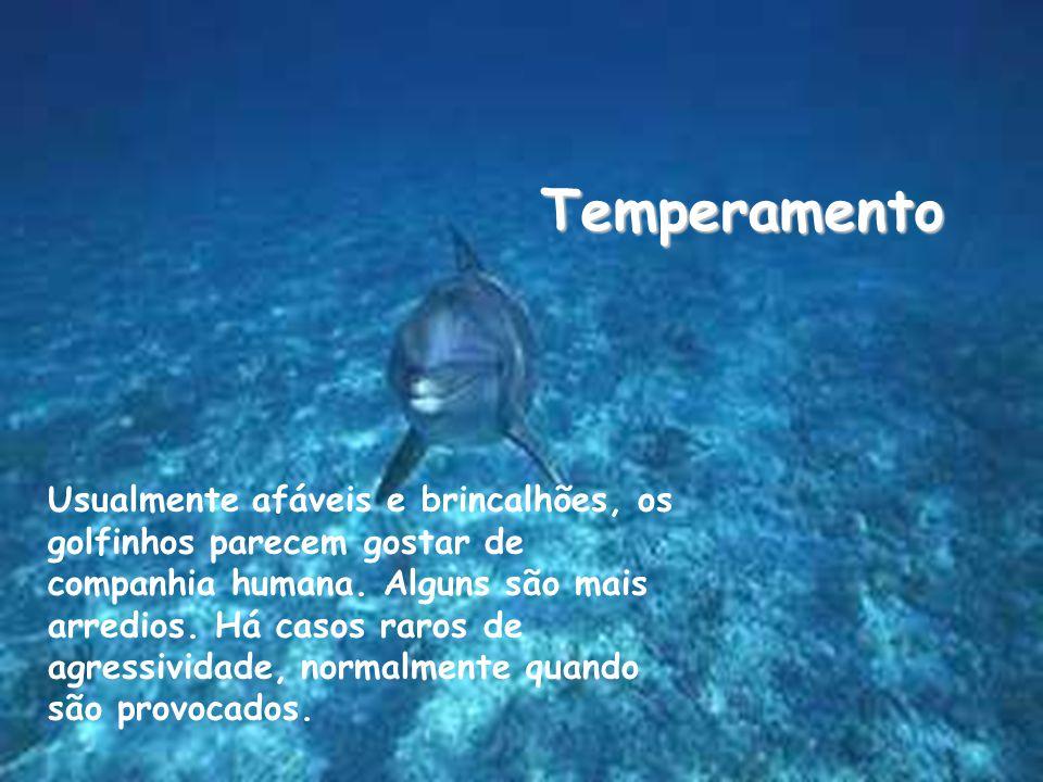 Temperamento Usualmente afáveis e brincalhões, os golfinhos parecem gostar de companhia humana.