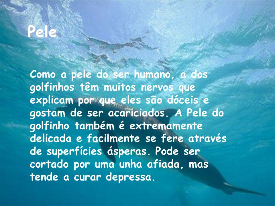Pele Como a pele do ser humano, a dos golfinhos têm muitos nervos que explicam por que eles são dóceis e gostam de ser acariciados.