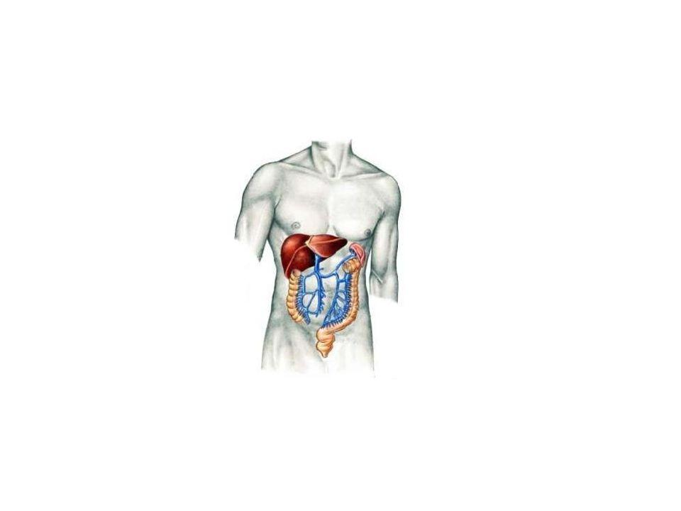 Principais funções Hematopoiese: juntamente com a medula óssea e o baço, o fígado participa da produção de células sanguíneas.