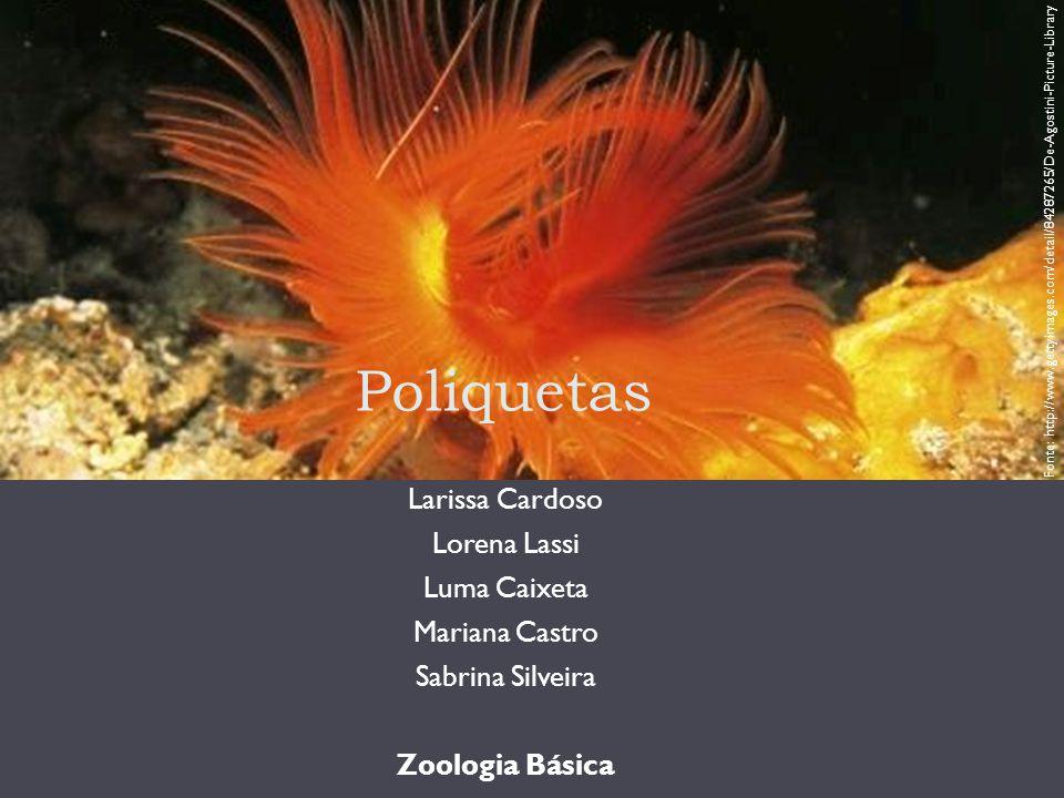 Poliquetas Do grego: poly + chaeta muitas cerdas Mais de 8.000 vermes aquáticos Maioria típico de ambiente marinho Coloridos ou iridescentes Tamanho: entre 5 e 10 cm, há exceções Fonte: http://www.gettyimages.com/detail/1286024 29/Photo-Researchers