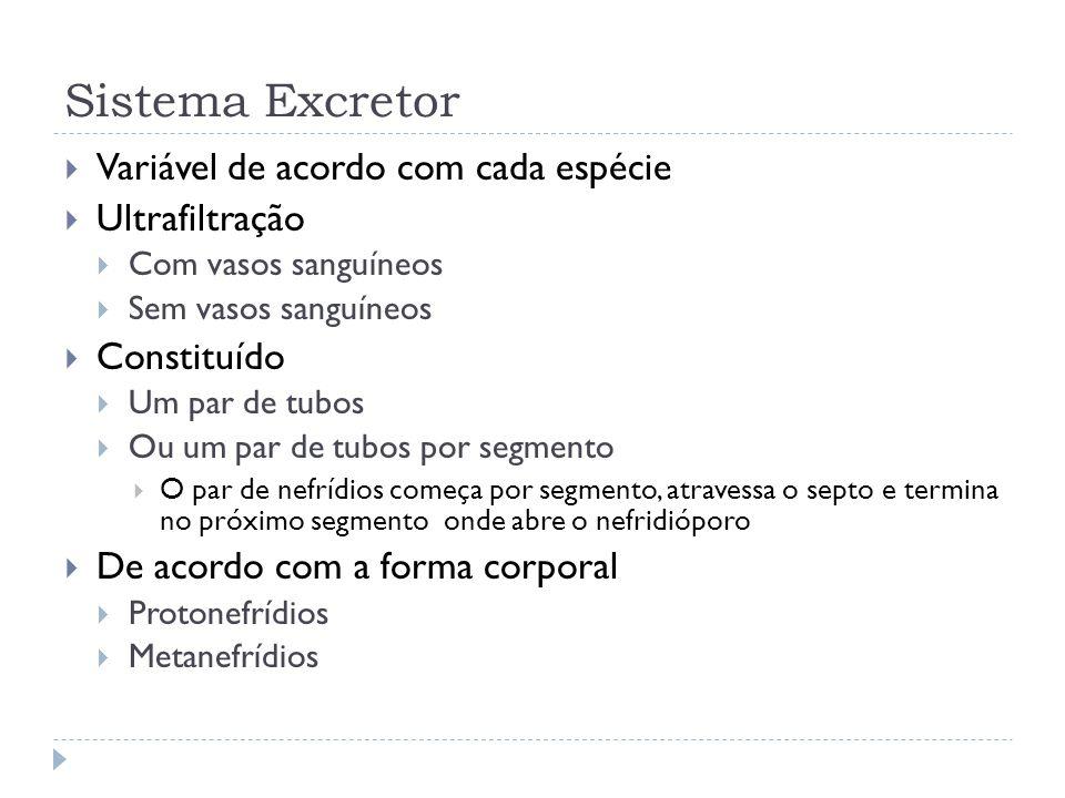Sistema Excretor Variável de acordo com cada espécie Ultrafiltração Com vasos sanguíneos Sem vasos sanguíneos Constituído Um par de tubos Ou um par de