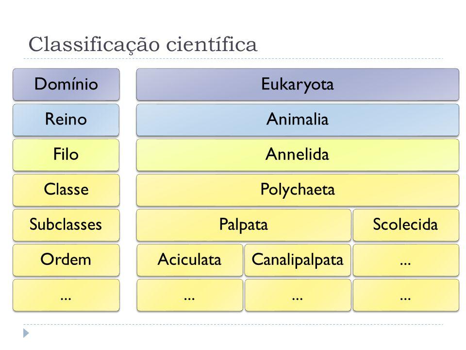 Classificação científica DomínioReinoFilo ClasseSubclassesOrdem... EukaryotaAnimaliaAnnelida PolychaetaPalpataAciculata...Canalipalpata...Scolecida...