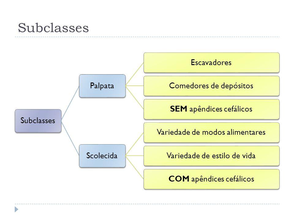 Subclasses Palpata EscavadoresComedores de depósitosSEM apêndices cefálicos Scolecida Variedade de modos alimentaresVariedade de estilo de vidaCOM apê