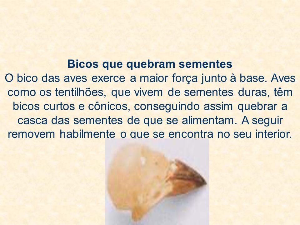 Bicos que quebram sementes O bico das aves exerce a maior força junto à base. Aves como os tentilhões, que vivem de sementes duras, têm bicos curtos e