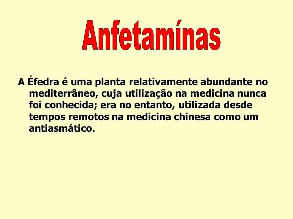 Estimulantes As drogas estimulantes têm em comum o facto de acelerarem o funcionamento do sistema nervoso central, reduzirem o apetite e tirarem o son