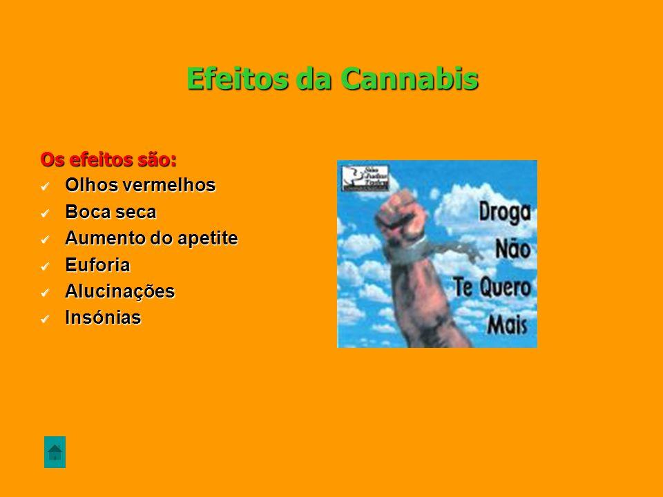 A cannabis é uma planta originária da Ásia e da América do Sul, sendo cultivada em várias partes do mundo, dos E.U.A à Europa. Para além da produção d