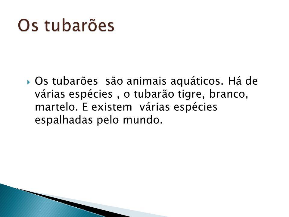 Os tubarões são animais aquáticos. Há de várias espécies, o tubarão tigre, branco, martelo. E existem várias espécies espalhadas pelo mundo.