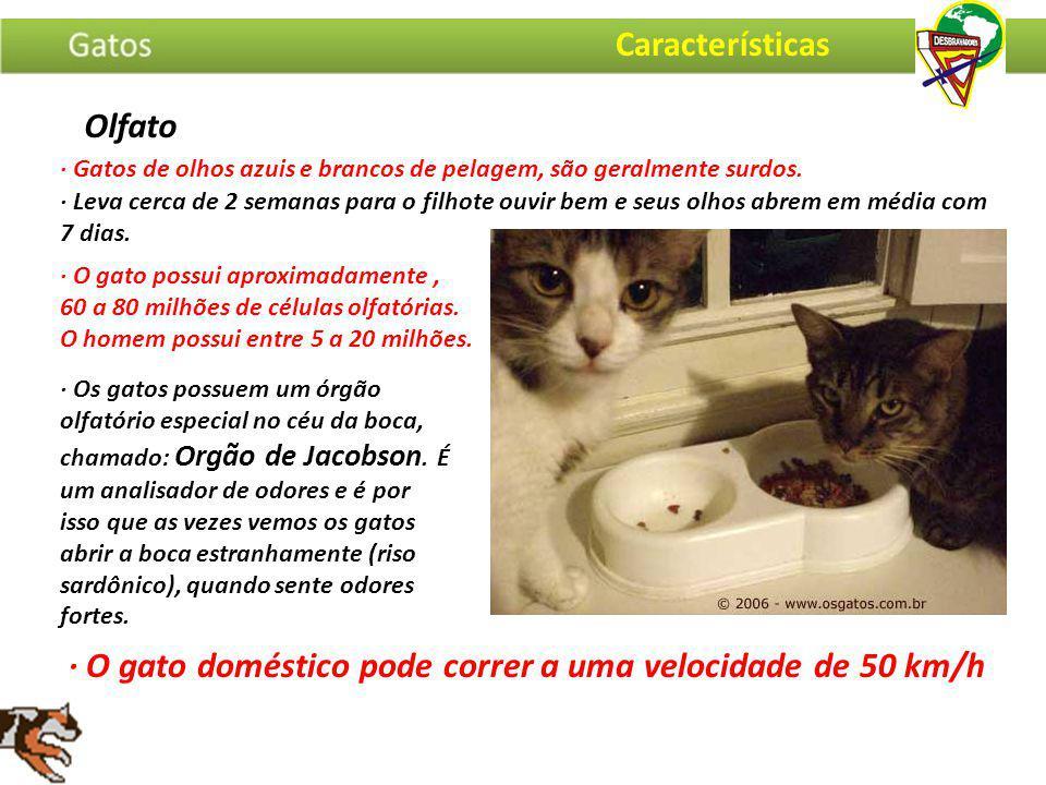 · Gatos de olhos azuis e brancos de pelagem, são geralmente surdos. · O gato doméstico pode correr a uma velocidade de 50 km/h · O gato possui aproxim