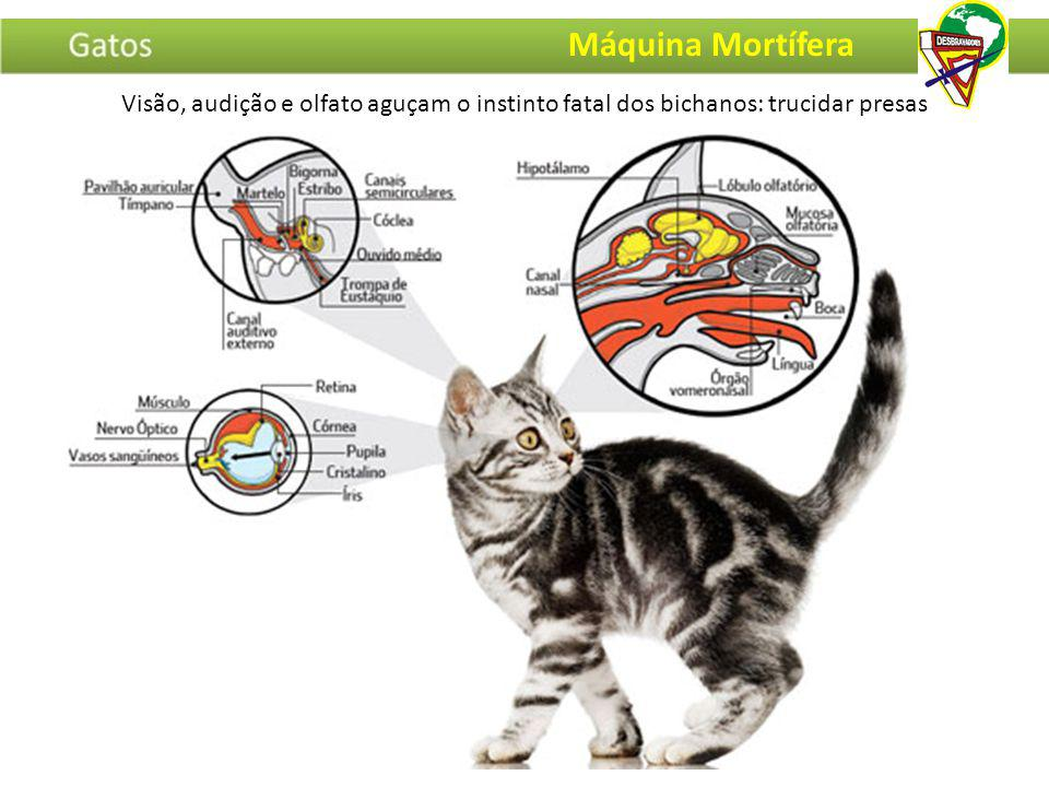 Visão, audição e olfato aguçam o instinto fatal dos bichanos: trucidar presas Máquina Mortífera