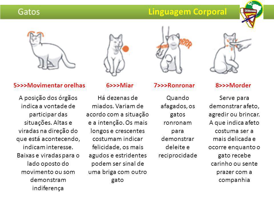 5>>>Movimentar orelhas6>>>Miar7>>>Ronronar8>>>Morder Linguagem Corporal A posição dos órgãos indica a vontade de participar das situações. Altas e vir