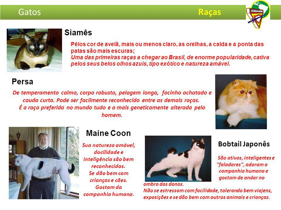 Pêlos cor de avelã, mais ou menos claro, as orelhas, a calda e a ponta das patas são mais escuras; Uma das primeiras raças a chegar ao Brasil, de enor