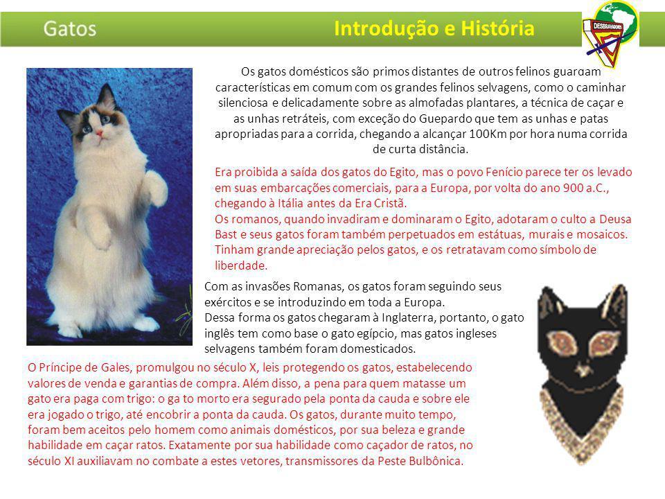 Os gatos domésticos são primos distantes de outros felinos guardam características em comum com os grandes felinos selvagens, como o caminhar silencio