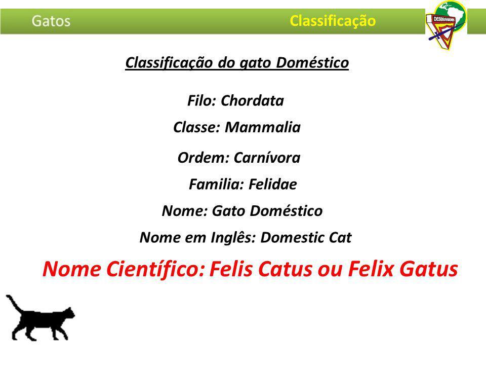 Classificação do gato Doméstico Filo: Chordata Nome em Inglês: Domestic Cat Nome: Gato Doméstico Familia: Felidae Ordem: Carnívora Classe: Mammalia No