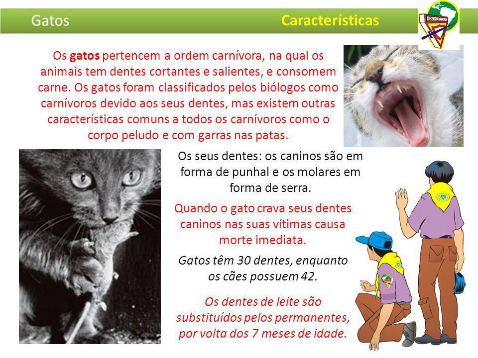 Os gatos pertencem a ordem carnívora, na qual os animais tem dentes cortantes e salientes, e consomem carne. Os gatos foram classificados pelos biólog