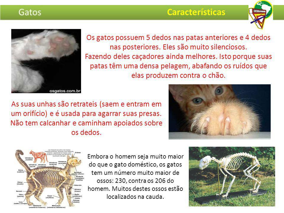 Caracal (Ásia) Tigre (Ásia) Pantera Negra (Ásia) Felinos Selvagens