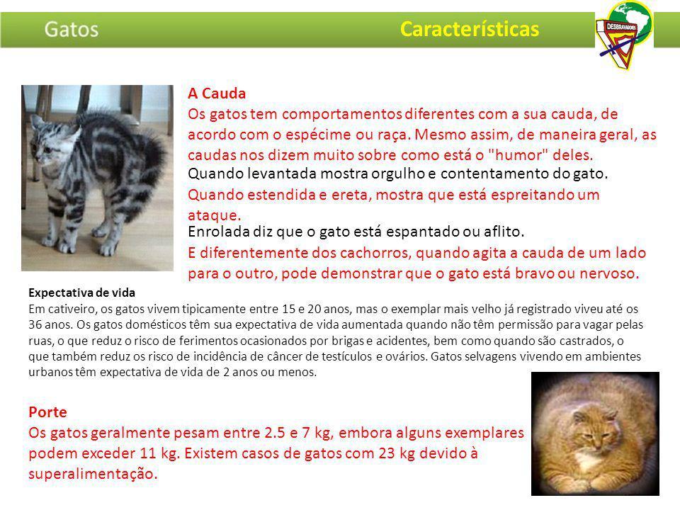 Porte Os gatos geralmente pesam entre 2.5 e 7 kg, embora alguns exemplares podem exceder 11 kg. Existem casos de gatos com 23 kg devido à superaliment
