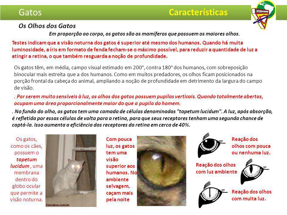 Os gatos, como os cães, possuem o tapetum lucidum, uma membrana dentro do globo ocular que permite a visão noturna. Com pouca luz, os gatos tem uma vi