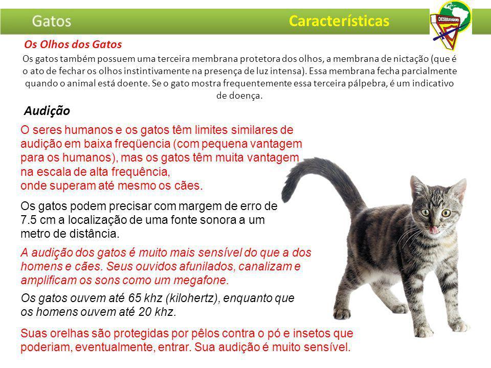· Gatos de olhos azuis e brancos de pelagem, são geralmente surdos.