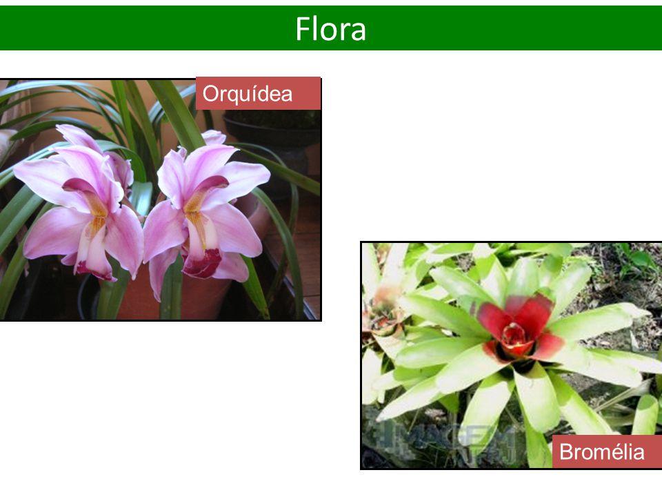 Orquídea Bromélia Flora