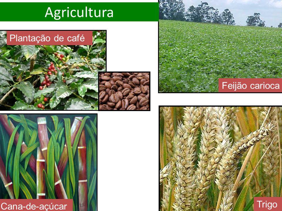 Trigo Cana-de-açúcar Feijão carioca Plantação de café Agricultura