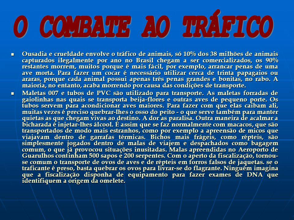 Ousadia e crueldade envolve o tráfico de animais, só 10% dos 38 milhões de animais capturados ilegalmente por ano no Brasil chegam a ser comercializad