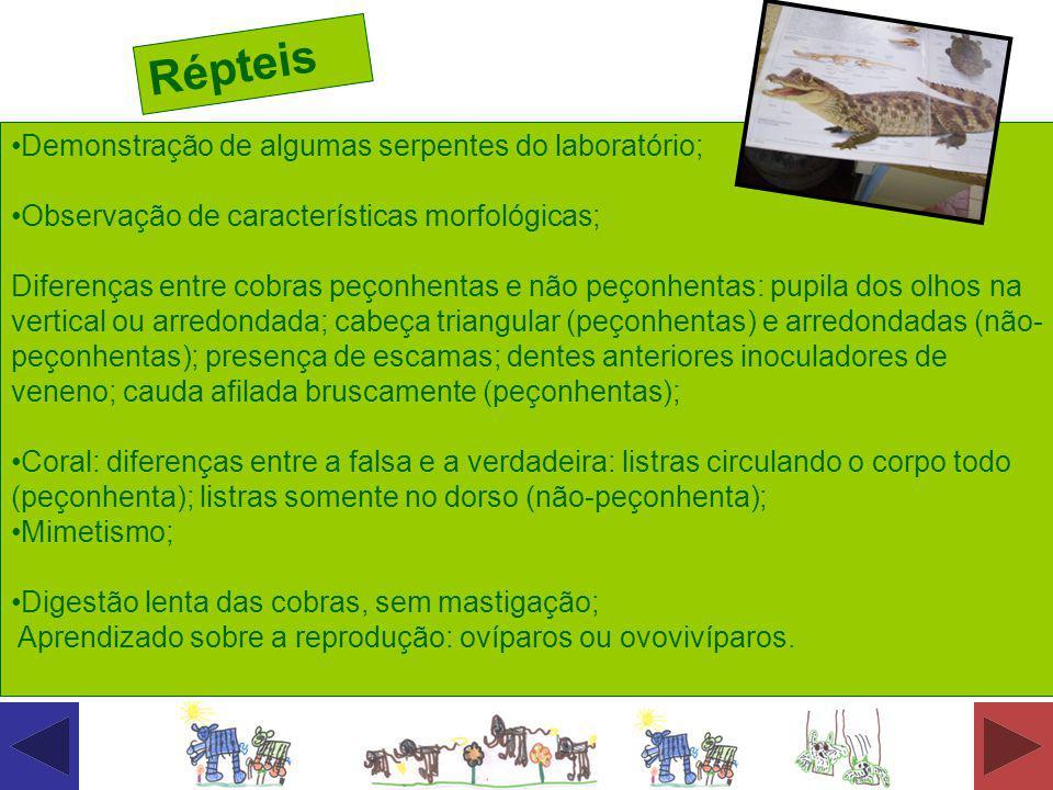 Demonstração de algumas serpentes do laboratório; Observação de características morfológicas; Diferenças entre cobras peçonhentas e não peçonhentas: p