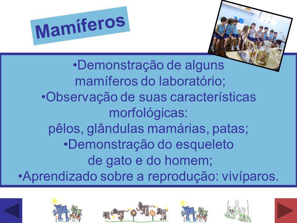 Demonstração de alguns mamíferos do laboratório; Observação de suas características morfológicas: pêlos, glândulas mamárias, patas; Demonstração do es