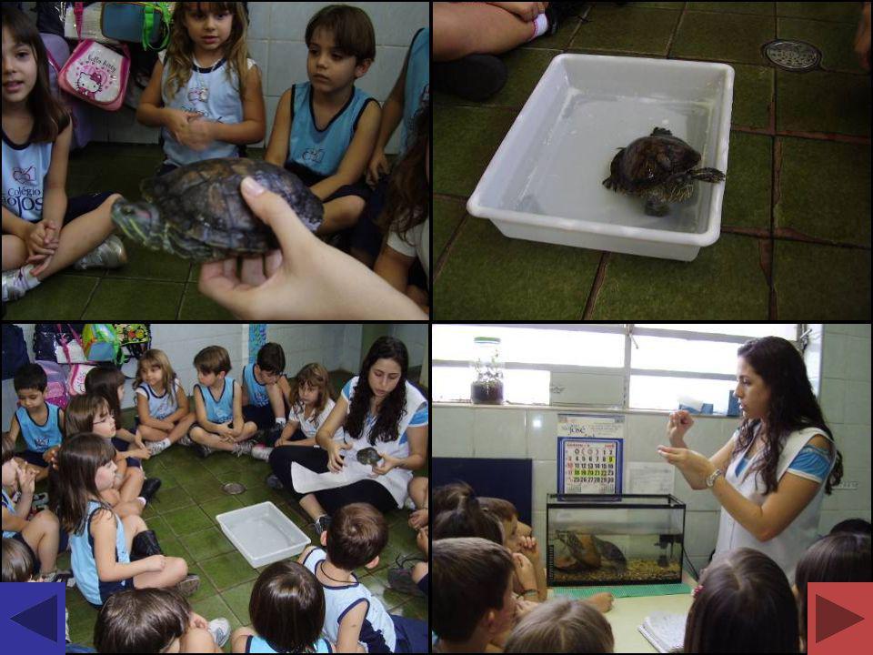 Conhecendo o Coelho Apresentação de um coelho aos alunos.