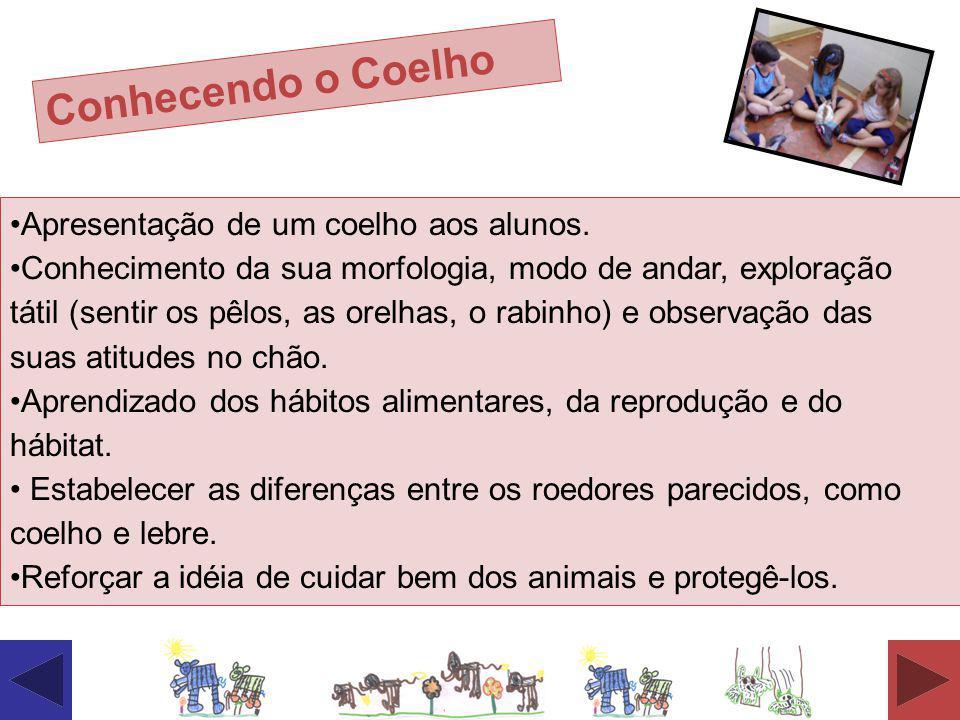 Conhecendo o Coelho Apresentação de um coelho aos alunos. Conhecimento da sua morfologia, modo de andar, exploração tátil (sentir os pêlos, as orelhas