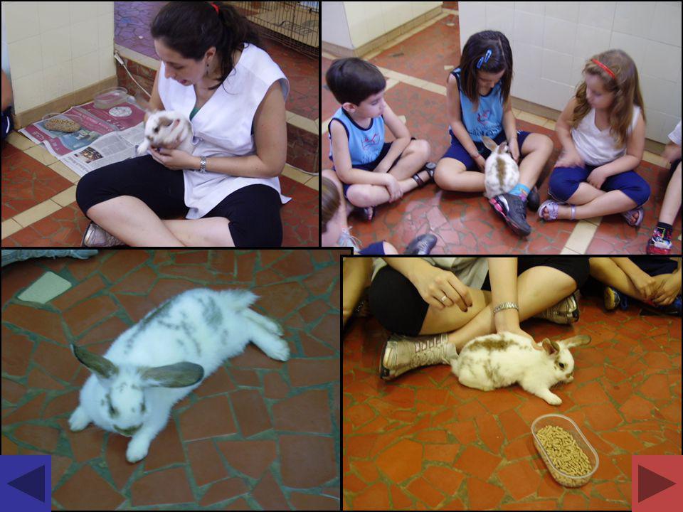 Demonstração de alguns mamíferos do laboratório; Observação de suas características morfológicas: pêlos, glândulas mamárias, patas; Demonstração do esqueleto de gato e do homem; Aprendizado sobre a reprodução: vivíparos.