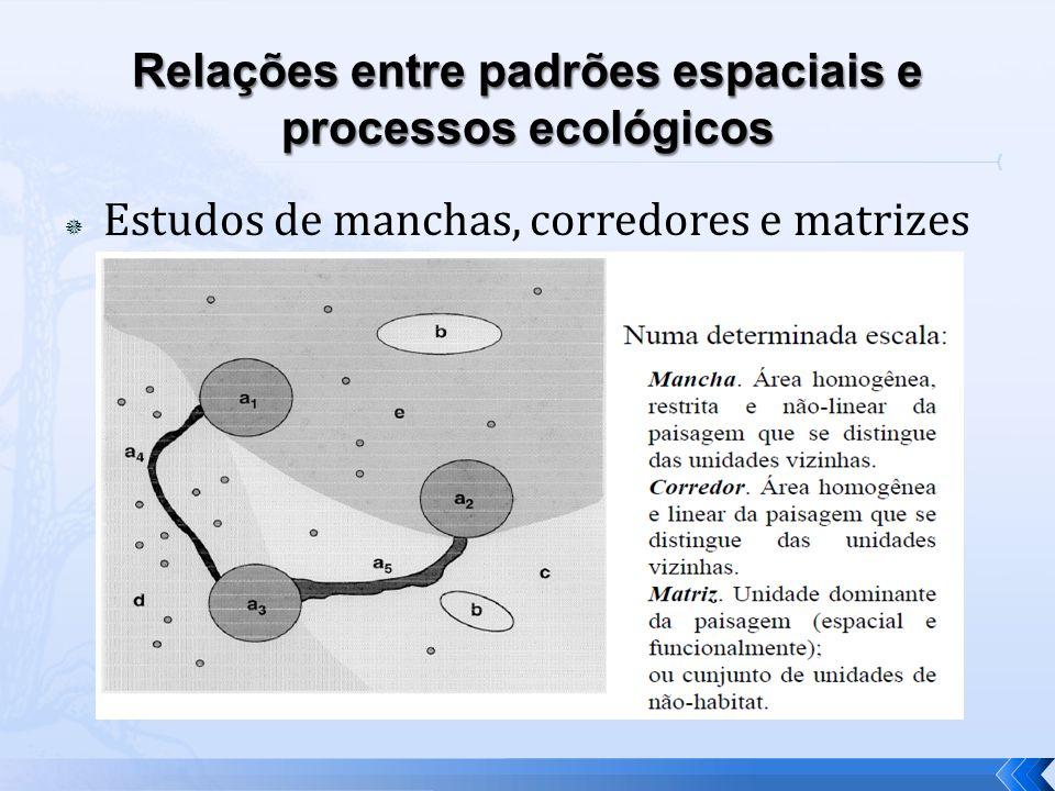 Estudos de manchas, corredores e matrizes