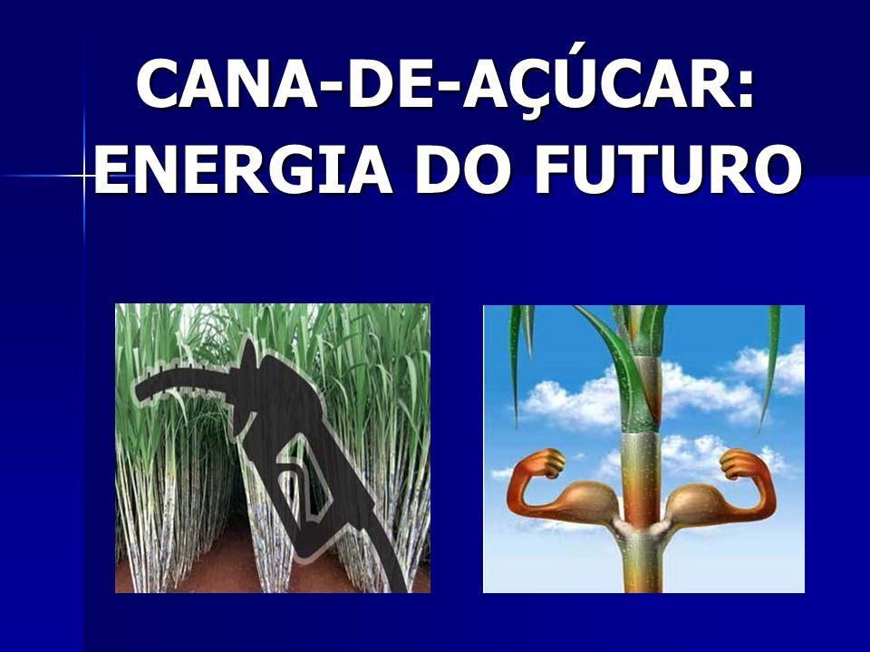 CANA-DE-AÇÚCAR: ENERGIA DO FUTURO