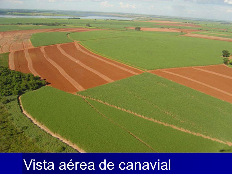 Vista aérea de canavial