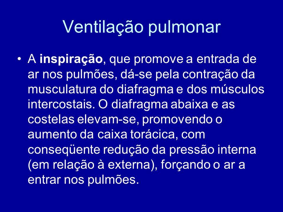 Ventilação pulmonar A inspiração, que promove a entrada de ar nos pulmões, dá-se pela contração da musculatura do diafragma e dos músculos intercostai