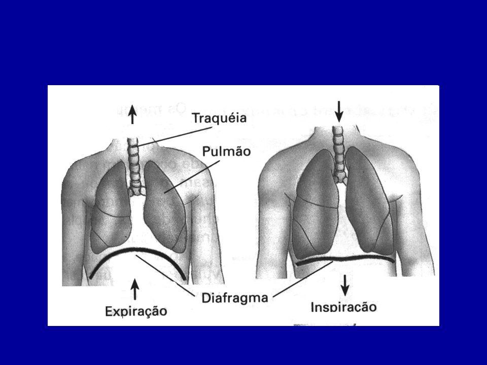 A expiração, que promove a saída de ar dos pulmões, dá-se pelo relaxamento da musculatura do diafragma e dos músculos intercostais.