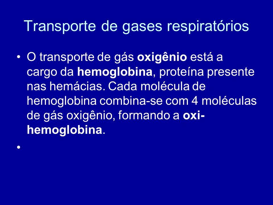 Transporte de gases respiratórios O transporte de gás oxigênio está a cargo da hemoglobina, proteína presente nas hemácias. Cada molécula de hemoglobi