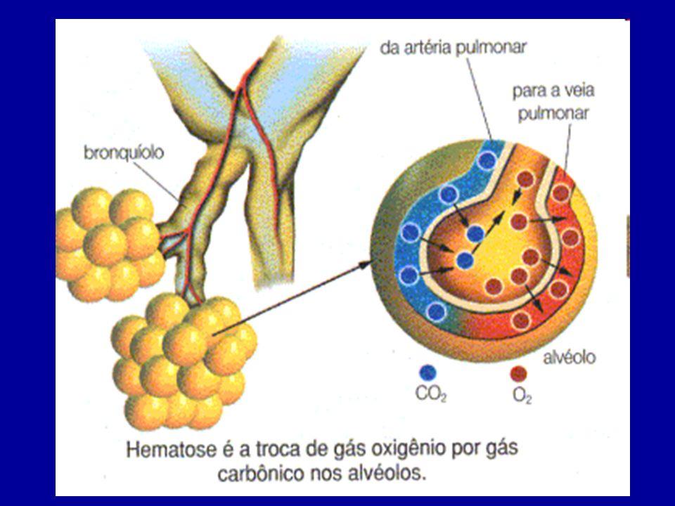 Nos tecidos ocorre um processo inverso: o gás oxigênio dissocia-se da hemoglobina e difunde- se pelo líquido tissular, atingindo as células.