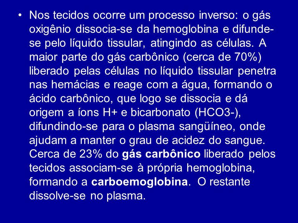 Nos tecidos ocorre um processo inverso: o gás oxigênio dissocia-se da hemoglobina e difunde- se pelo líquido tissular, atingindo as células. A maior p